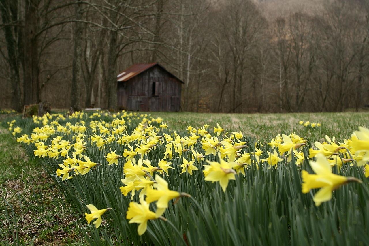 Filefield yellow spring wild flowers west virginia forestwander filefield yellow spring wild flowers west virginia forestwanderg mightylinksfo