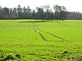 Field Near Kirkton - geograph.org.uk - 353713.jpg