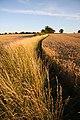 Field boundary near Rattlesden - geograph.org.uk - 1421634.jpg