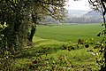 Field by the Woodland Edge - geograph.org.uk - 412883.jpg
