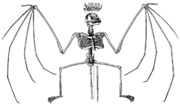 Szkielet nietoperza