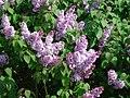 Fleurs jardin dorian 2.JPG