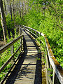Flickr - Nicholas T - Pool Wildlife Sanctuary (8).jpg