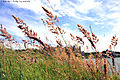 Flickr - law keven - The answer is blowing in the wind....jpg