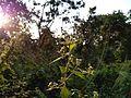 Flora of buxa.jpg