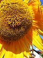 Floral photography - Photo by Giovanni Ussi 50.jpg