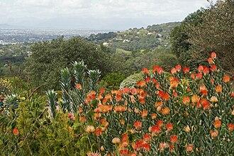 Cape Floristic Region - Image: Floraregio van de Kaap