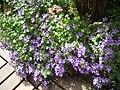 Flores-1.jpg