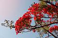 Flores rojas de Mayo.jpg