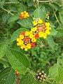 Flores vermelhas amarelas.jpg