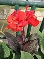 Flors del parque de las Musas de Chiclayo03.jpg