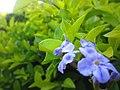 Flower's macro shot.jpg