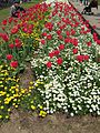 Flower-center135603.jpg