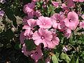 Flower 8 (6820980252).jpg