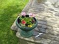 Flower Pot 1 (2068146504).jpg