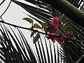 Flower in blur mood.jpg