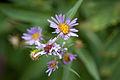 Flowers (4169004515).jpg
