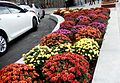 Flowers at Northern Avenue, ArmAg (1).jpg