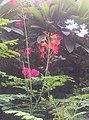 Flowers that everyone likes.jpg