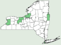 Foeniculum vulgare NY-dist-map.png