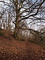Footpath and Beech Tree near to Linnelswood Bridge - geograph.org.uk - 1724255.jpg