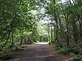 Footpath in Delamere Forest - geograph.org.uk - 1313570.jpg