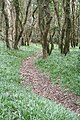 Footpath through the woods above Cowlands Creek - geograph.org.uk - 1225871.jpg
