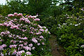 Forest-trail-flowers - West Virginia - ForestWander.jpg