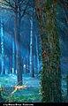 Forest (8499155535).jpg