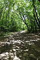 Forest @ Roc de Chère @ Talloires (35606175036).jpg