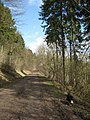 Forest Road in Wendover Woods - geograph.org.uk - 1202204.jpg