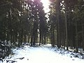 Forest between Langenthal and St. Urban, Zankhölzli - panoramio (1).jpg