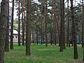 Forest between the buildings - panoramio.jpg