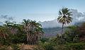 Forest in San Juan Bautista 45.jpg