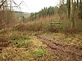 Forest of Dean near Lady Park Wood - geograph.org.uk - 1724504.jpg