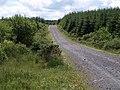 Forest road, Halvana Plantation - geograph.org.uk - 842521.jpg