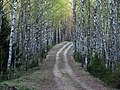 Forest trail in Põhja-Kõrvemaa, 2011-05.jpg
