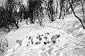 Forsvinningsdrakter - Camouflage (1940) (4733759366).jpg