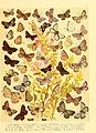 Fr. Berge's Schmetterlingsbuch nach dem gegenwärtigen Stande der Lepidopterologie neu bearb. und hrsg. von Professor Dr. H. Rebel (Plate 14) (6058527285).jpg