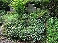 Friedhof heerstraße berlin 2018-05-12 (94).jpg