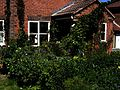 Front garden - Flickr - peganum (16).jpg