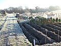 Frosty Allotments - geograph.org.uk - 296100.jpg