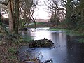 Frozen pond beside Ashmore Lane - geograph.org.uk - 1628469.jpg