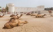 Fuerte Al Koot, Doha, Catar, 2013-08-06, DD 01.JPG