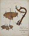 Fungi agaricus seriesI 014.jpg