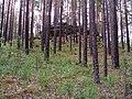 G. Miass, Chelyabinskaya oblast', Russia - panoramio (144).jpg