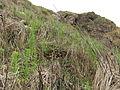 Gaotou - Jin Mountain - terrace remainders - DSCF3284.JPG