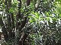 Gardenology.org-IMG 0573 rbgs10dec.jpg