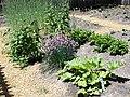 Gardens at Gibson House (3).jpg