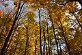 Gatineau Park, October 2018 (35) (31456322868).jpg
